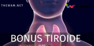 Bonus tiroide Inps 2020. Cos'è davvero l'indennità riconosciuta per l'invalidità