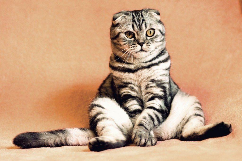 Bonus animali domestici 2021 a 550 euro come funziona (Foto di Kirgiz03 per Pixbay)