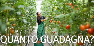Quanto guadagna un operatore agricolo in Italia?