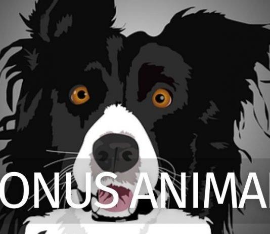 Bonus cani e gatti 2021: cos'è e come funziona