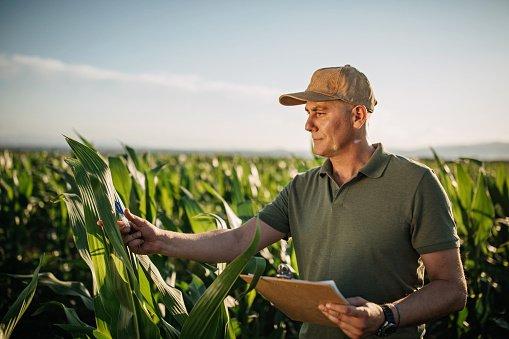 Prezzi terreni agricoli: scopri il suo valore?