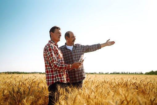 Disoccupazione agricola: cos'è e come beneficiarne.